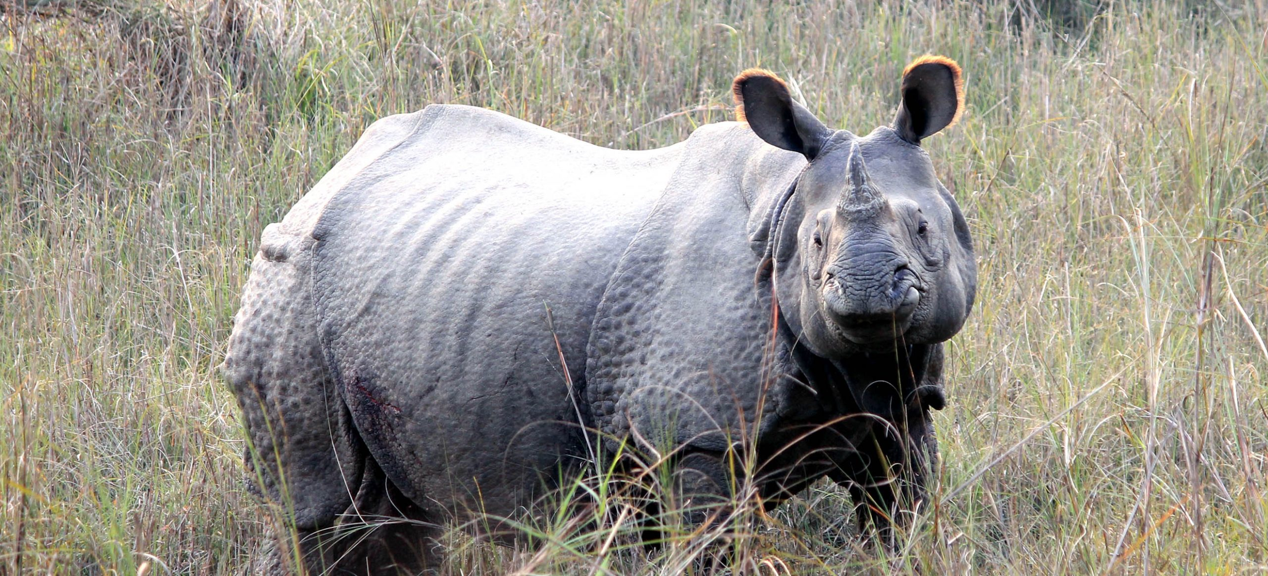One-Horned Rhino Tour in Nepal