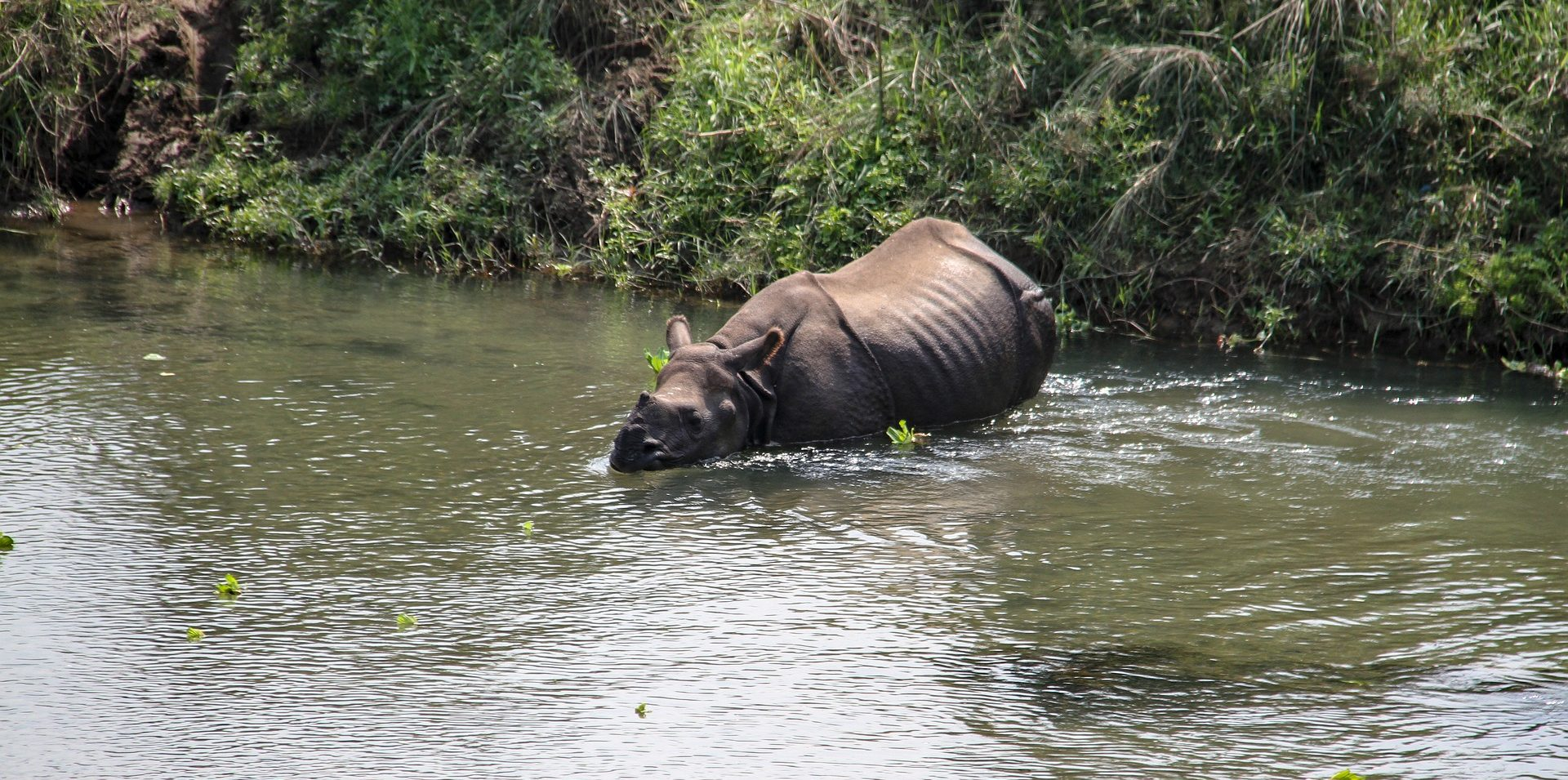 Rhino Conservation in Nepal