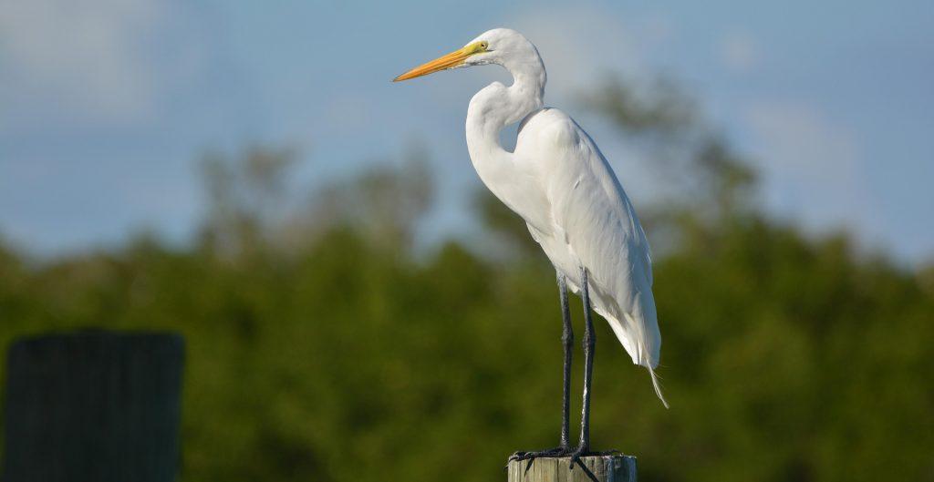 Bird Watching in Koshi Tappu Wildlife Reserve