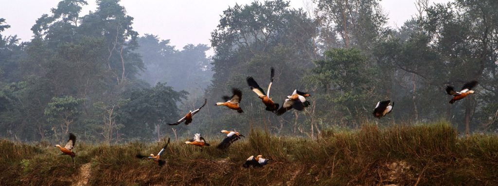 Climate Chitwan NP