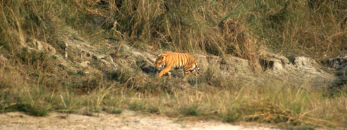 Wildlife and vegetation in Bardia National Park