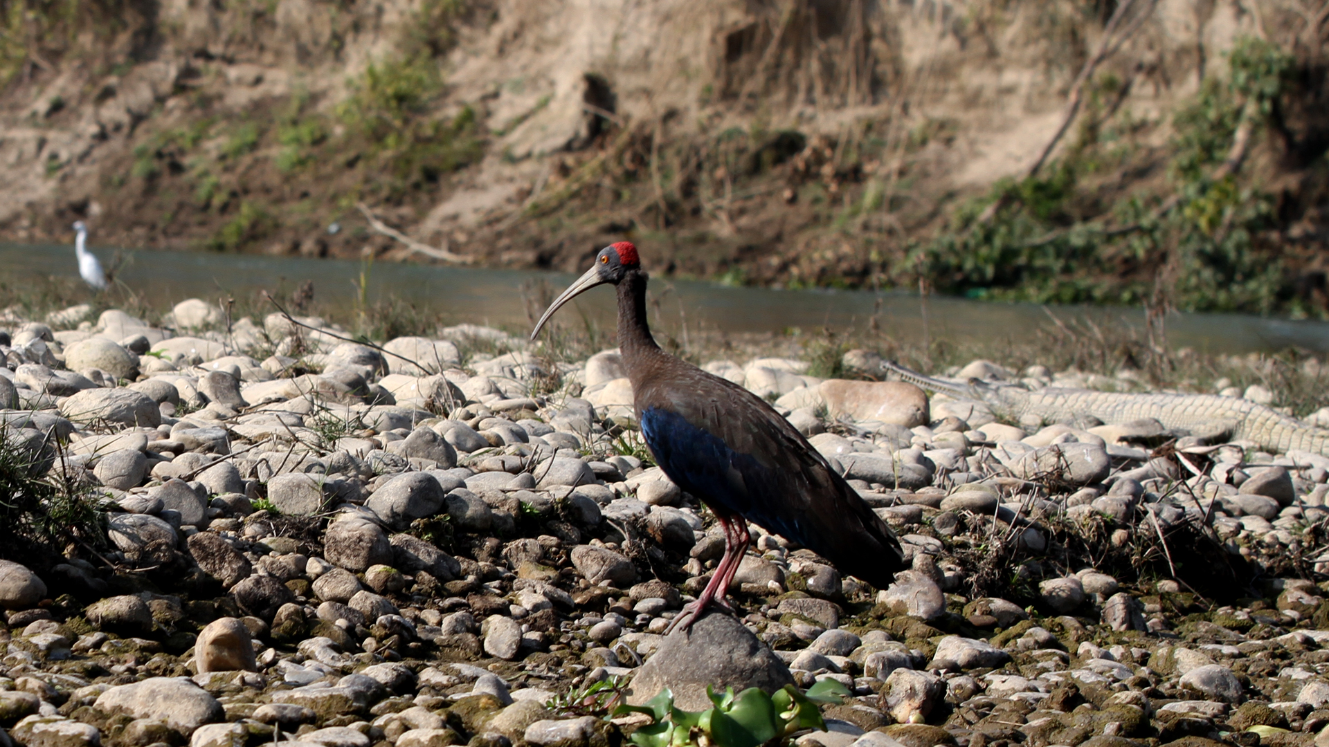 Bird Count Reaches 450 in Shuklaphanta National Park