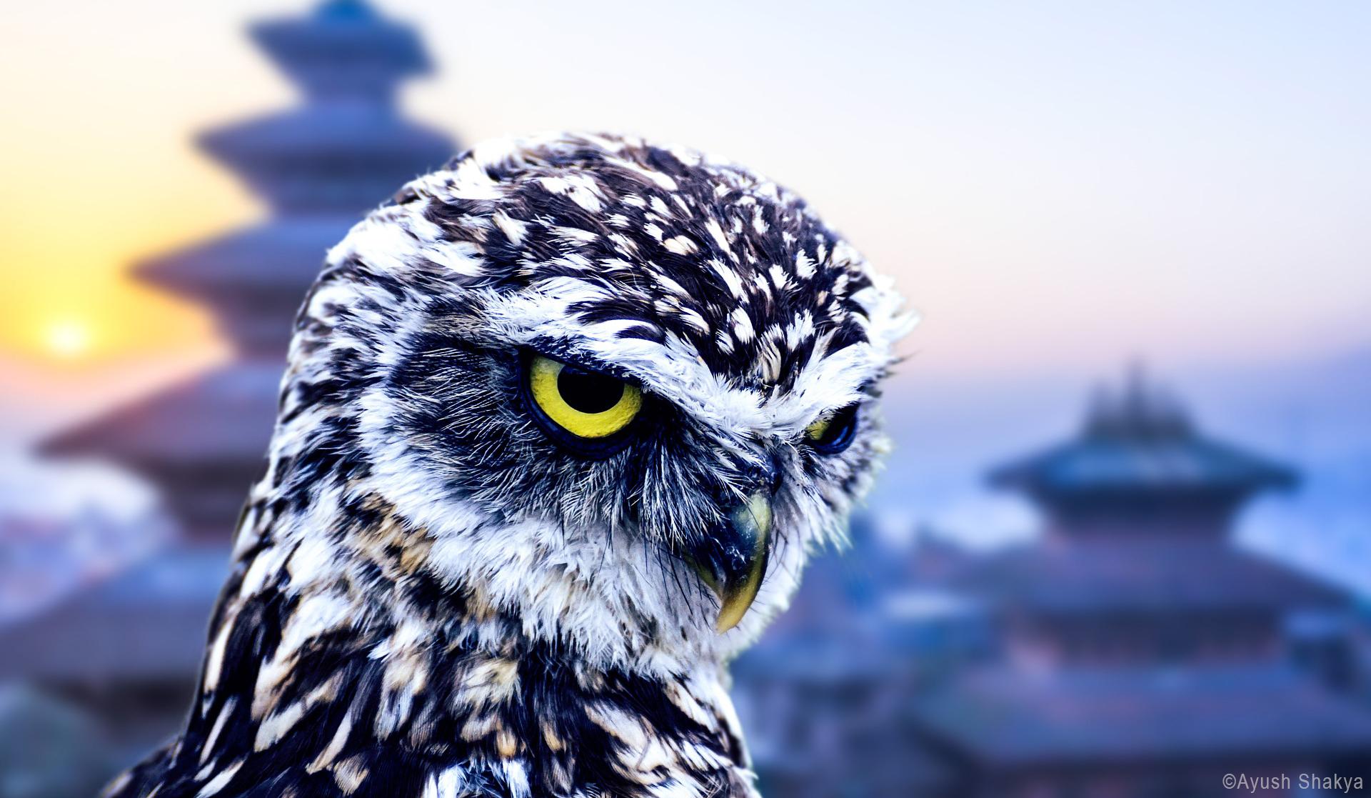 Common Birds of Kathmandu