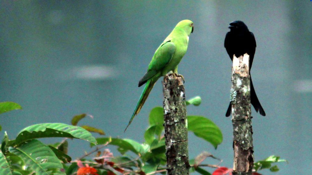 Bird Watching - Photography Tour