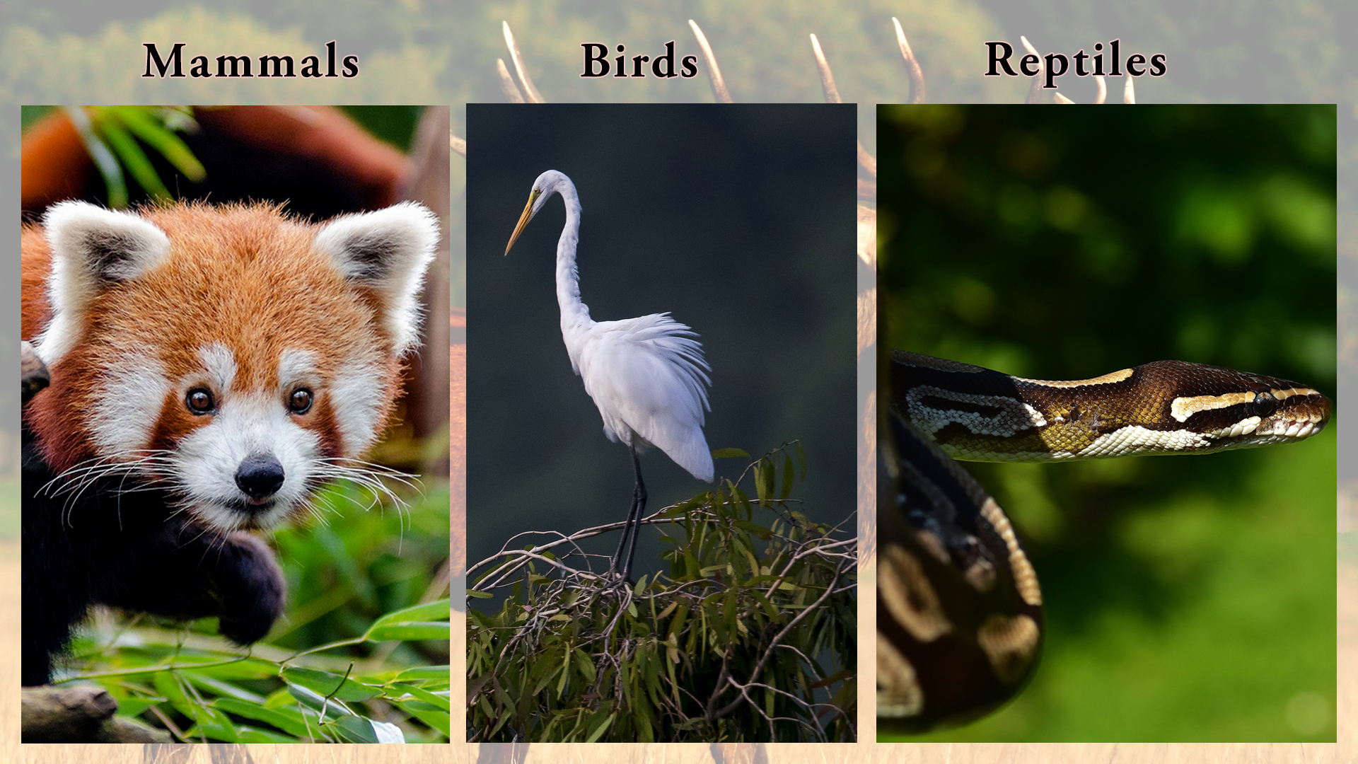 Protected Animals of Nepal
