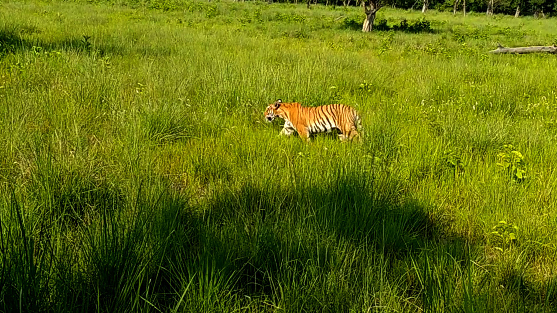 On The Tiger Trail<